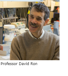 Professor David Ron