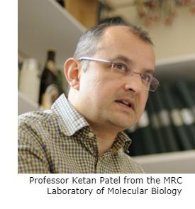 Professor Ketan Patel